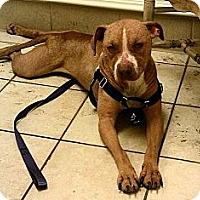 Adopt A Pet :: Nathalie - Nashua, NH