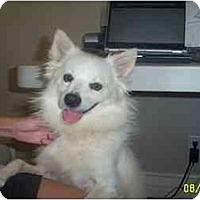 Adopt A Pet :: Trixie - chandler, AZ