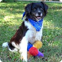 Adopt A Pet :: Bosley - Mocksville, NC