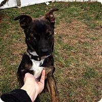 Adopt A Pet :: Murphy - Sinking Spring, PA