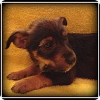 Adopt A Pet :: Bobbie Jo - Indian Trail, NC