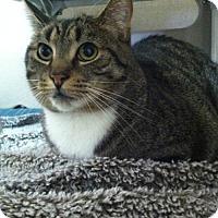 Adopt A Pet :: Bertie - Frankenmuth, MI