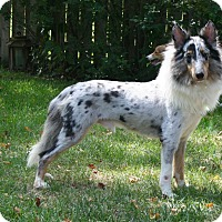 Adopt A Pet :: Buddy (K) - Mission, KS