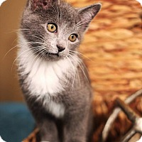 Adopt A Pet :: Ross - Plymouth, MN