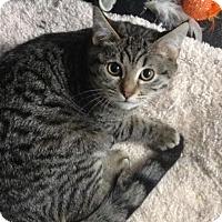 Adopt A Pet :: J.K. - Westminster, CA