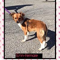 Adopt A Pet :: Erin (Pom) - Hagerstown, MD