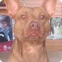 Adopt A Pet :: Nora - Darien, GA