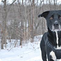 Adopt A Pet :: Dean - New Castle, PA