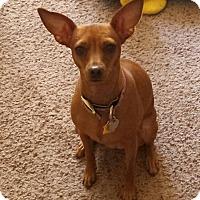 Adopt A Pet :: Cinnamon - Tucson, AZ