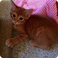 Adopt A Pet :: Hawthorne - McDonough, GA