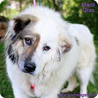 Adopt A Pet :: Mardi Gras - Bloomington, MN