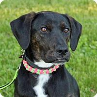 Adopt A Pet :: Kid - Grafton, WI