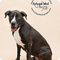 Adopt A Pet :: Suzy - Apache Junction, AZ