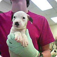 Adopt A Pet :: A277420 - Conroe, TX