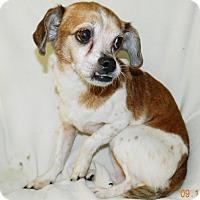 Adopt A Pet :: Mocha - Umatilla, FL