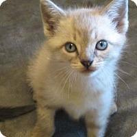 Adopt A Pet :: Opal - Wichita, KS