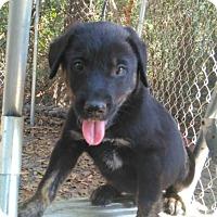Adopt A Pet :: Kricket - Matawan, NJ
