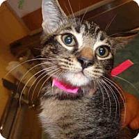 Adopt A Pet :: ELOISE - Fountain Hills, AZ