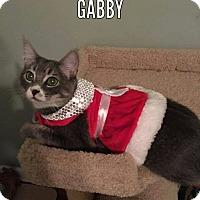 Adopt A Pet :: Gabby - Tega Cay, SC