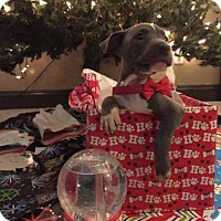 Adopt A Pet :: Hermey - New Port Richey, FL