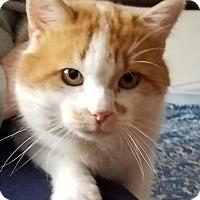 Adopt A Pet :: Dexter - Rochester, MN