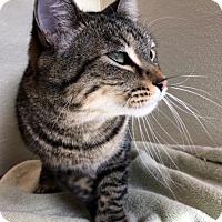 Adopt A Pet :: Bisquit - North Las Vegas, NV