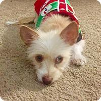 Adopt A Pet :: Chanel - Spring, TX