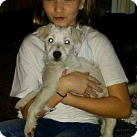 Adopt A Pet :: Noel - Albemarle, NC