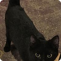 Adopt A Pet :: satin - Muskegon, MI