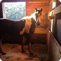 Adopt A Pet :: Tonka - cumming, GA