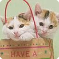 Adopt A Pet :: Holly and Jolly - New York, NY