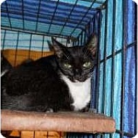 Adopt A Pet :: Stella - Fort Lauderdale, FL