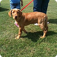 Adopt A Pet :: Bosley - Southampton, PA