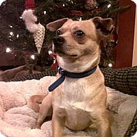 Adopt A Pet :: Gibby - 84, PA