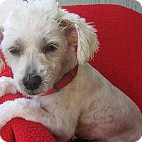 Adopt A Pet :: Azelia-WATCH MY VIDE0!!!! - Irvine, CA