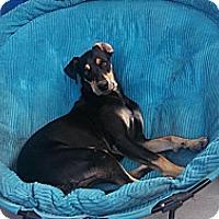 Adopt A Pet :: Nero - San Diego, CA