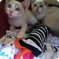 Adopt A Pet :: Oscar - La Canada Flintridge, CA