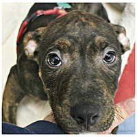 Adopt A Pet :: Jake - Forked River, NJ