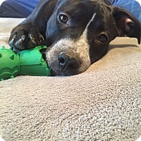 Adopt A Pet :: DAISY - Nashville, TN