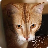 Adopt A Pet :: Arthur - Burbank, CA