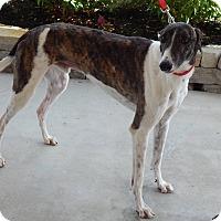 Adopt A Pet :: Lieutenant - Florence, KY