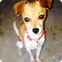 Adopt A Pet :: Molly formerly Monthy - Las Vegas, NV