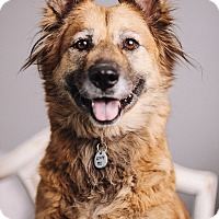 Adopt A Pet :: Shadow - Portland, OR
