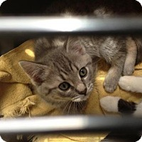 Adopt A Pet :: Toni - Caistor Centre, ON