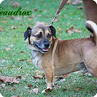 Adopt A Pet :: Bordeaux - Daleville, AL