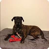 Adopt A Pet :: Myles - Caledon, ON