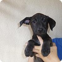 Adopt A Pet :: Eureka - Oviedo, FL