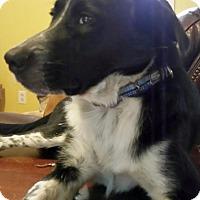Adopt A Pet :: Harold - Homewood, AL