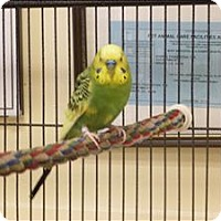Adopt A Pet :: Octavian - Elizabeth, CO
