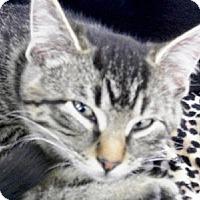 Adopt A Pet :: Lena - Castro Valley, CA